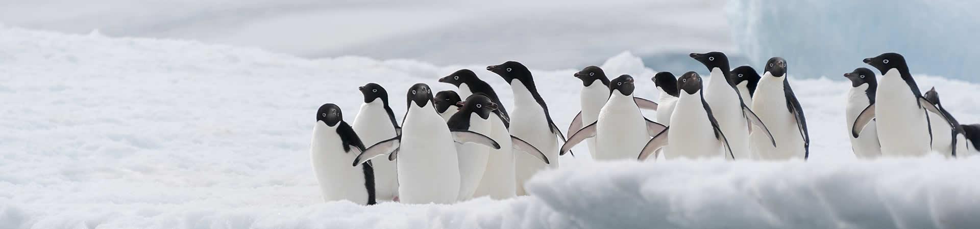 pinguins-energie-management